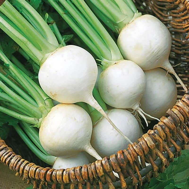 Бяла зимна ряпа - семена